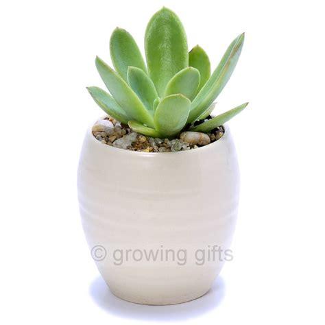 succulent pots succulent luna pots