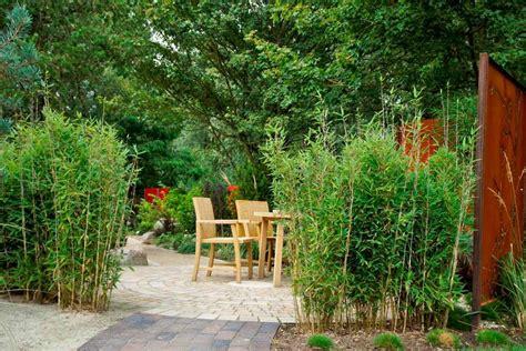 sichtschutz pflanzen schmal bambushecken sorten und pflanzabstand bambuswald