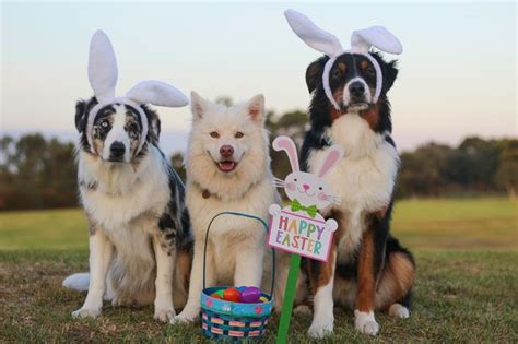 easter breaks with dogs keep the family and dogs happy when travelling these