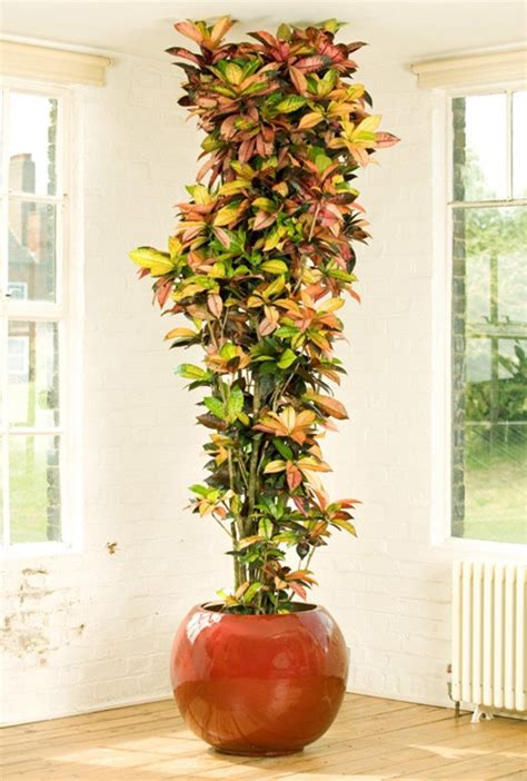 plantas altas de interior plantas de interior fotos planta alta para el salon