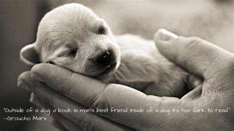 puppy best friends best friend quotes inspire leads