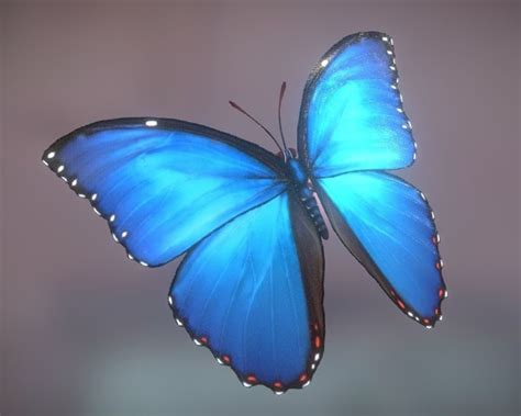 Animated Butterfly 3d Model Game Ready Animated Rigged Butterfly 3d Animation