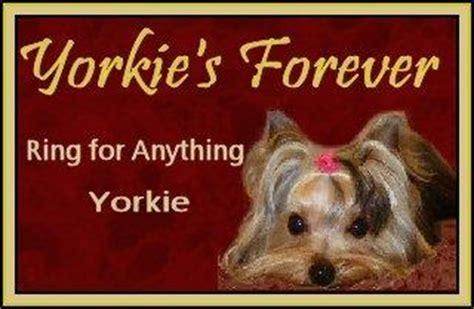 nc yorkie breeders yorkies terriers yorkie breeder nc carolina terrier