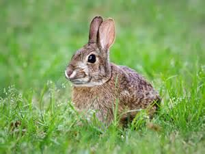 Hase Oder Kaninchen Wo Ist Der Unterschied