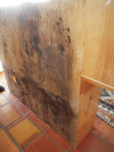 Black Mold In Kitchen Cabinets Adkins Air Conditioning And Heating Mold Services Adkins Air Conditioning And Heating Repair