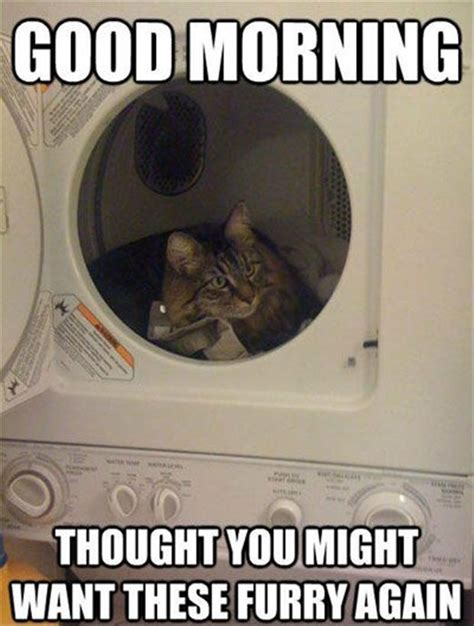 Thoughtful Memes - 4 cat hair on my clothes funny pictures dump a day