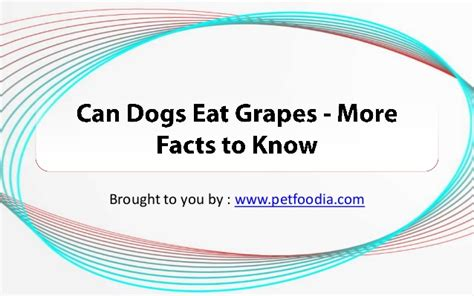 why can t dogs eat grapes can dogs eat grapes more facts to