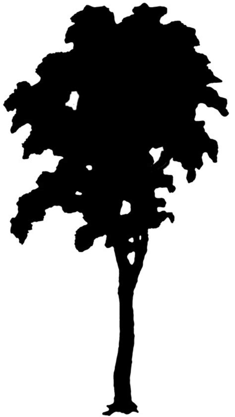 Simple Listy Black And White tree silhouette clip clipart best