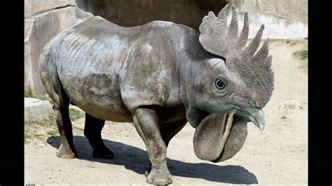 imagenes de animales extraños reales animales extra 241 os y dinosaurios youtube