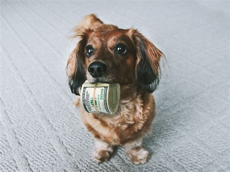 free of with dogs with money a holding money dogs money doll flickr