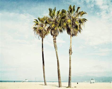 California Palm california palm trees venice photograph los angeles