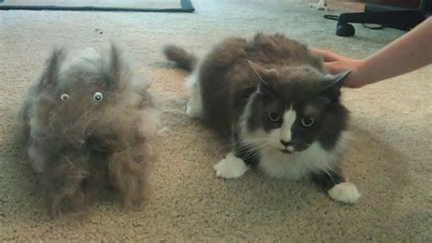 Cats And Shedding by 15 Pics That Perfectly Sum Up A Pet Bored Panda