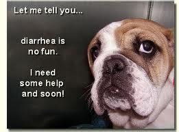 how to help puppy diarrhea how to treat diarrhea in dogs shealth