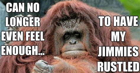 Baboon Meme - 1000 images about jokes and funny stuff on pinterest