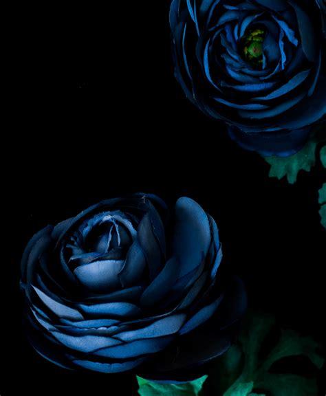 gambar wallpaper bunga biru gudang wallpaper