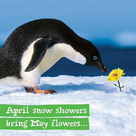 April Showers Or April Snow by April Snow Showers Bring May Flowers Avanti Press