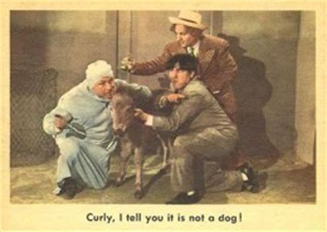 1959 fleer three stooges curly i tell you it is not a dog 1959 fleer three stooges trading cards checklist info