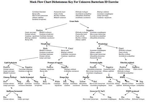 dichotomous key flowchart dichotomous key for unknown gram positive bacteria the
