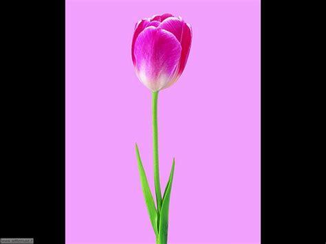 cerco immagini di fiori foto fiori singoli per sfondi settemuse it