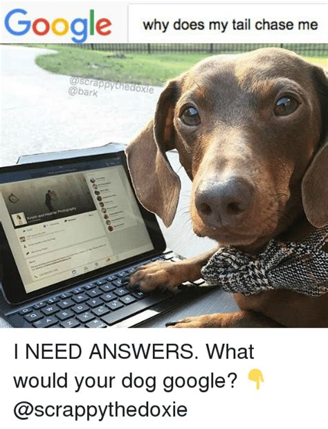 100 why does my dog bark when i leave the house is 25 best memes about chasee chasee memes