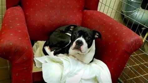 poltrona per cani poltrone per cani in un rifugio per farli sentire a casa