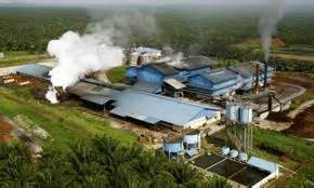 Perkiraan Minyak Kelapa konsultan perkebunan kelapa sawit mei 2014