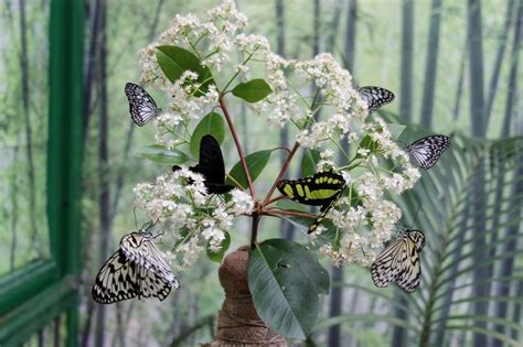 casa delle farfalle bordano orari una passeggiata alla casa delle farfalle di bordano
