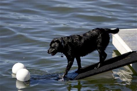 dog boat float doggydocks floatable dog r