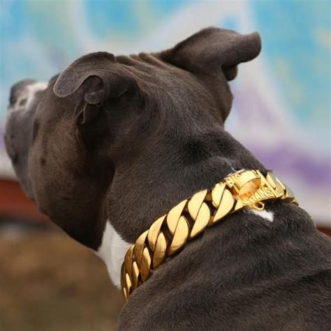puppy gold best 25 gold collar ideas on