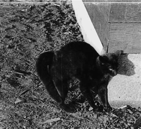 Alain Delon Ad326 1331 Black cat black and white creepy horror black darkness