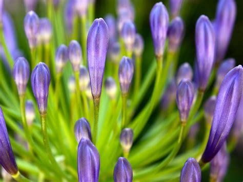 google images flower google flower backgrounds