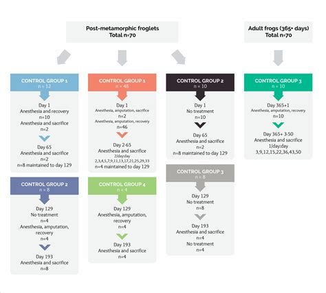 infographic flowchart template 40 infographic ideas to jumpstart your creativity visual