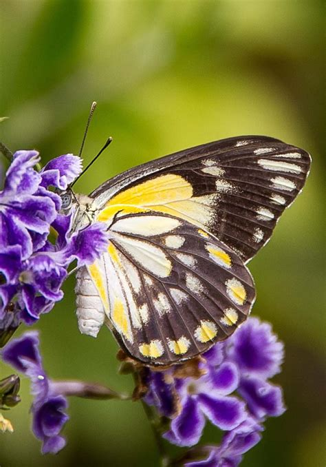 Beautiful Butterfly the 30 most beautiful butterflies mostbeautifulthings
