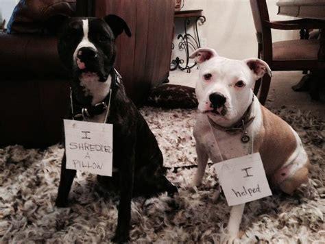 bad dogs bad images usseek