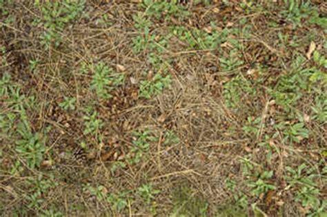 jungle floor texture rainforest floor texture www pixshark images galleries with a bite