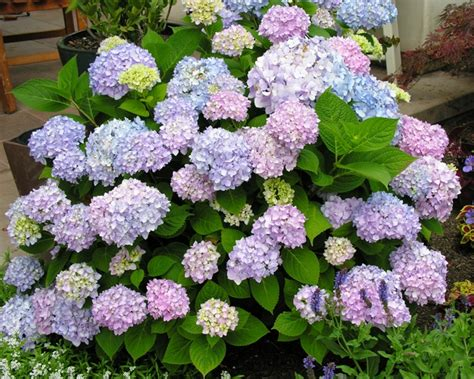 flower shrubs for sun unordered list adventures list trees and decorative