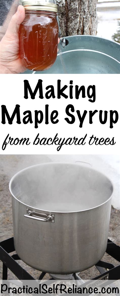 backyard maple syrup making maple syrup practical self reliance