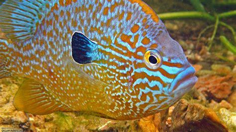 fish girl writes  beauty   backyard