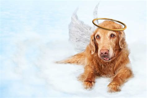 all dogs name all dogs go to heaven inspired names wag