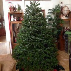 tajiri s richard christmas trees 16 photos 12 reviews