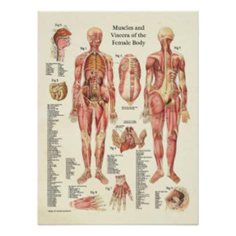 innere organe des menschen schaubild innere organe poster designs zazzle ch