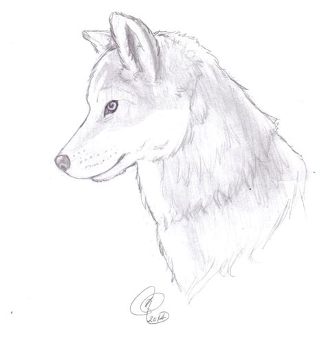 pin gray wolf coloring page pictures on pinterest