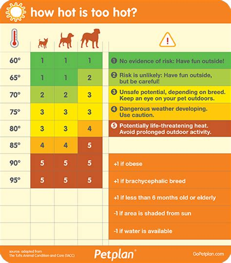 symptoms of dehydration in dogs 5 warning signs your is dehydrated some pets