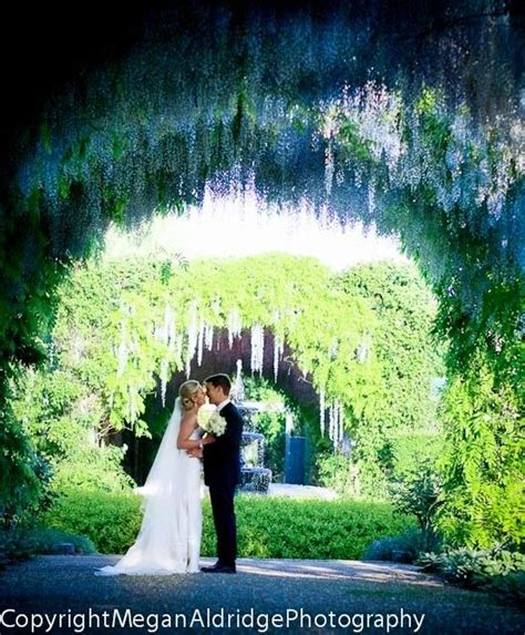 Wedding Arch With Wisteria by Arch Of Wedding Flowers Purple Flower Arch Purple