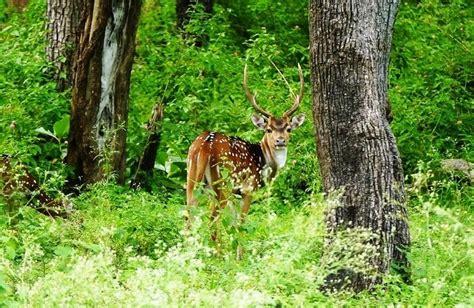 national parks  karnataka