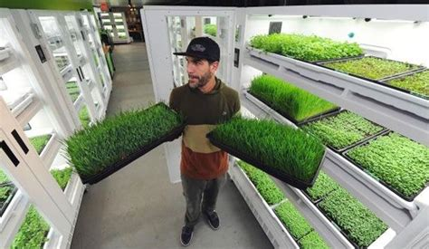 Living Produce Aisle Grows The Greens It Sells Right In The Store » Home Design 2017