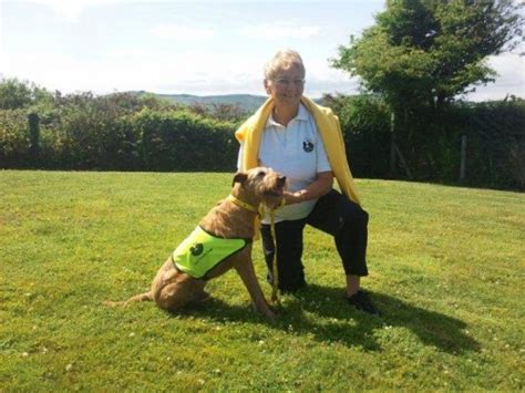 best therapy dogs dogs are the best therapy dogs volunteer janet vesey clonakilty