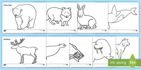 Arctic Animals Colouring Sheets   Arctic, winter, xmas