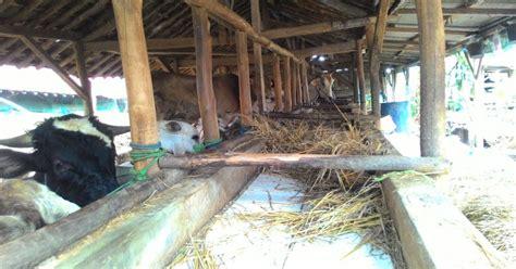 Tv Tuner Dibawah 100 Ribu alasan harga daging sapi tak bisa di bawah rp100 ribu kg okezone ekonomi