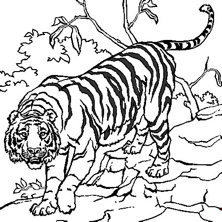 Coloriage A Imprimer Dany Le Tigrel